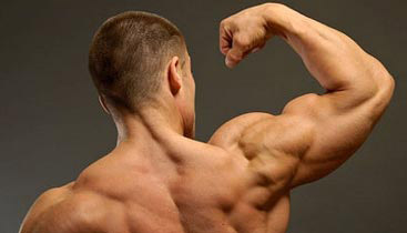 build biceps and triceps