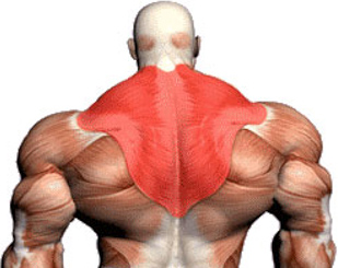 how to build big traps: complete traps workout for mass, Sphenoid