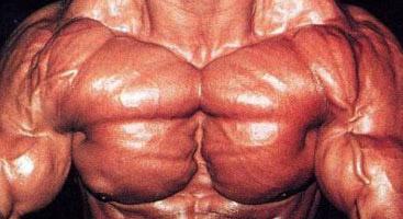 inner pec muscle
