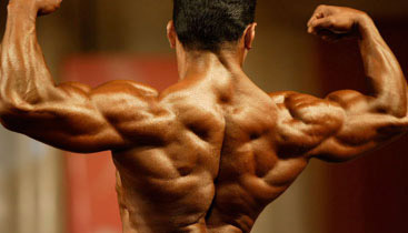 lat muscles