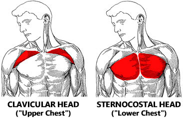 Best Exercise To Build Upper Middle Chest