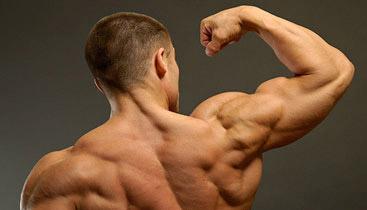 rear delt muscles