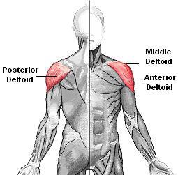The 3 Best Shoulder Exercises For Mass