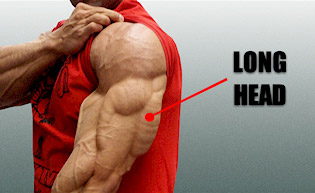 Complete Tricep Workout For Mass