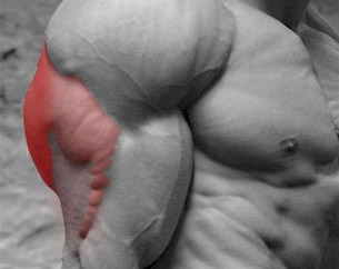 Biceps Training Is An Important Part Of A Complete Workout Plan For Building Up Your Arms But Did You Know That Triceps Are Actually Twice As Big And