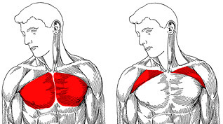 upper and lower chest