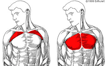 How To Build Pectoral Muscles At Home