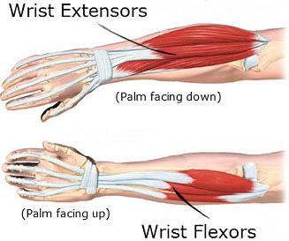 Build Wrist Muscle