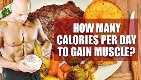 calories to gain muscle