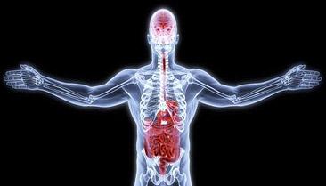 glutamine immune system