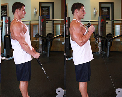 cable hammer curl