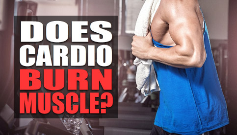 does cardio burn muscle