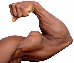 bigger biceps and triceps