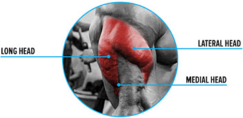 lateral-head-triceps