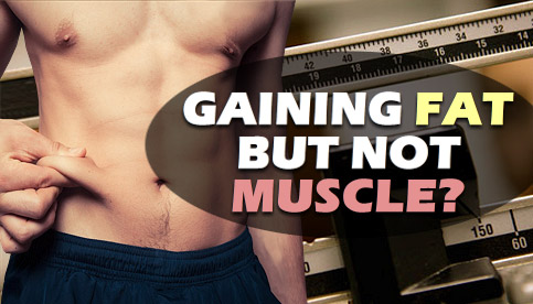 gaining fat but not muscle