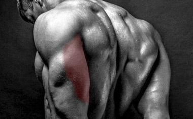 triceps long head