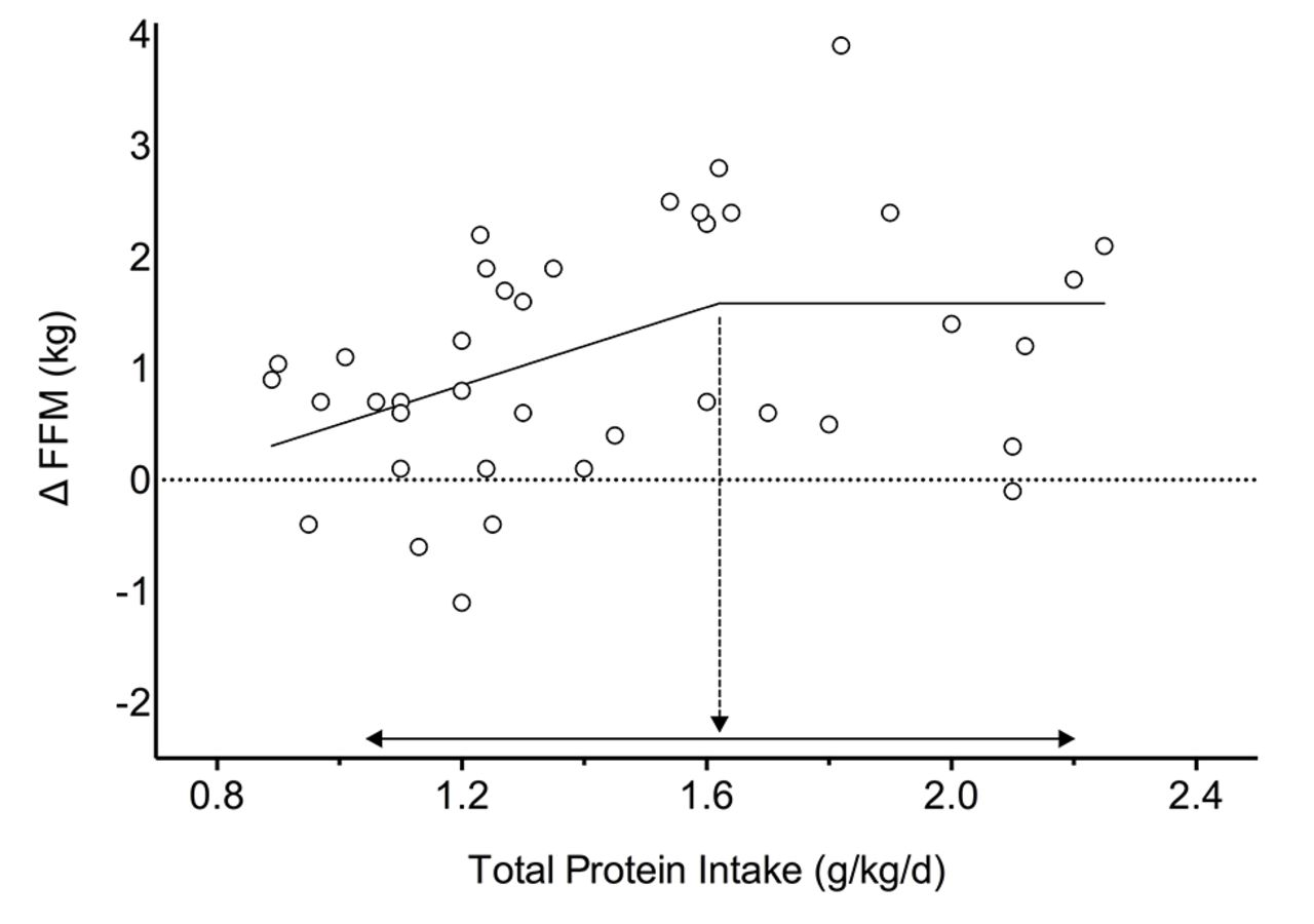 Protein Intake Effect on Muscle Growth